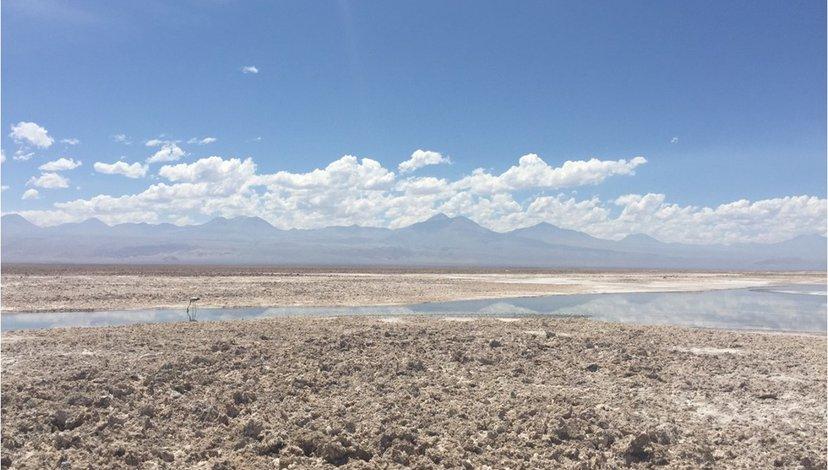 Chilean Flamingos in the Salar de Atacama